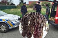Kvůli policii nám zemřel v pes v útulku, tvrdí vedoucí Toulavých tlapek v Poděbradech