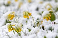 Po přívalu sněhu přišel další extrém: V noci bylo -20 °C