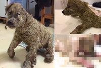 Neuvěřitelné týrání: Děti štěňátko polily lepidlem a vymáchaly v bahně, udělaly z něj živoucí sochu