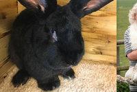Skandály United Airlines: Obří kompenzace za obřího králíka…