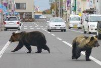 V Japonsku vraždí medvědi. Poslední obětí je žena trhající bambus