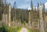 Lesníci chtějí od státu kompenzace za kůrovce. Hrozí i nátlakovými akcemi