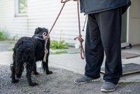 Nové očkování a čipování psů bezdomovců zdarma: O akci je informují letáčky