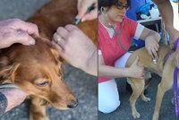 Povinné čipování psů schválil Senát: Dotkne se 1,5 milionu mazlíčků v Česku
