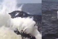 Jen o fous unikli smrti: Dostat se do cesty velrybě se nevyplácí