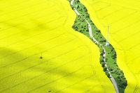 Žlutá pole nenesou: Úroda řepky padá, klesne i sklizeň obilí
