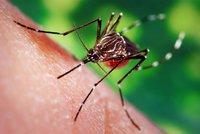 Smrtící komáři na Moravě: Jak moc jsou nebezpeční a jak se bránit? Expert odpovídá