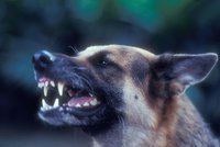 Žena prozradila, jak přežila zběsilý útok psů. Má za sebou 24 operací