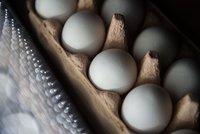 Toxická vejce v Česku? Takhle poznáte ta bezpečná