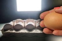 Za jedovatá vejce asi mohou Belgičané: Do drůbežáren poslali špatnou dezinfekci