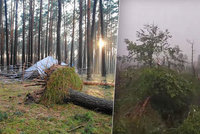 Skaut o tragédii v táboře: Vedoucí oživovali dívky, pomoc si razila cestu šest hodin