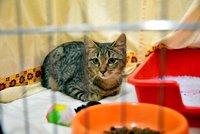 Vezměte si domů kočičku. Na Praze 3 rozdávali chlupaté bezdomovce