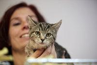 Opuštěné kočky budou shánět své nové páníčky. V rámci výstavy představí 30 plemen