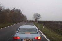 Řidiče v Maďarsku překvapili jeleni na silnici: Byly jich stovky