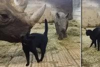 Fenomén internetu pochází z Česka: Kočka Mia se mazlí s nosorožci!