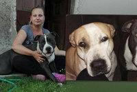 Konec pátrání po psech z Volárny: I fenku Lety našli roztrhanou