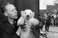 Brum brum, blahopřejme medvědům! První uměle odchovaný lední medvěd se narodil před 75 lety