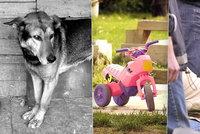 Smrt chlapce (†1) z Přerova, kterého zabil pes, není ojedinělá. Další děsivé případy z Česka