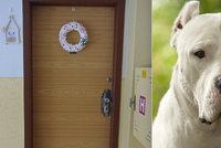 V Přerově zakousl pes chlapce (†1), zemřel při návštěvě babičky