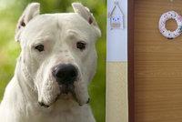 Chlapce zakousl v Přerově pes: Vnoučka (†1) oživovala marně babička