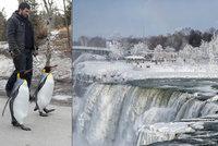 Kanadu sevřely třeskuté mrazy: Tučňákům je venku zima! Zoo je stěhuje dovnitř