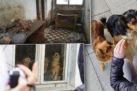 Odsud pochází na kost zmrzlý Radovánek: Ochráncům zvířat bylo po vstupu do domu na omdlení
