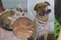 Češi pořádají hon na tyrany zvířat: Po případu zbitého štěněte ukazují na další