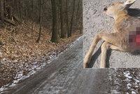 V Modřanské rokli zabíjejí psi zvěř. Myslivci vybízejí návštěvníky k ohleduplnosti