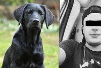 Případ týraného štěněte už má v rukou soud: Marley nemá následky, Jakubovi hrozí maximálně 2 roky
