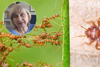 """Štěnice, švábi a mravenci v bytě: """"Lidé se za ně stydí, situaci je ale nutné řešit,"""" říká pražská hygienička"""