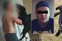 Trable týraného štěněte Marleyho nekončí: Podstoupilo další operaci