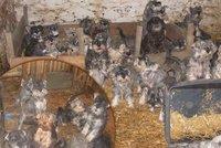 Před 4 lety zde odebrali 120 zbídačených zvířat: Množírna u Vestce jede dál, tvrdí ochránci