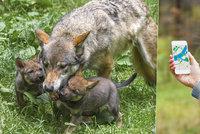 """Pražskou zoo trápí hledači """"kešek"""": Vystavují se obrovskému nebezpečí!"""