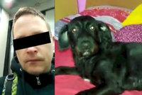 Psa v Brně vyhodil z 9. patra! Bezcitný »páníček« si trest odpracuje: Soud mu uložil 300 hodin