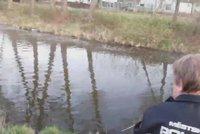 Zoufalá žena volala policii na bobra: Odchyt dal strážníkům zabrat