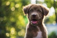 Nepochopitelný incident při venčení: Pohladil si štěně, jeho majitel dal seniorovi facku!