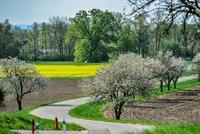V květnu se mírně ochladí. Jarní počasí pokazí i bouřky a déšť