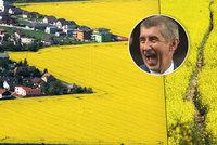 """""""Žlutý mor"""" škodí zemi i zvířatům! Babiš: Za pyl řepka nemůže"""