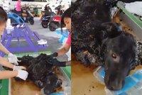 Pes pomalu umíral v tvrdnoucím asfaltu. Přežít mu pomohli lidé s velkým srdcem