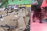 Jenifer málem zemřela krutou smrtí v drtičce odpadu! Koťátko našli zalepené v krabici na třídicí lince