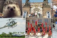 Tipy na víkend: Na návštěvu k prezidentovi, na spartakiádu, helicoptershow nebo za ježky