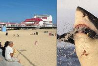 Smrtící žralok v britském letovisku? Místní zakopávají o mršiny a trnou hrůzou