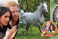 Nevhodné dary pro královské novomanžele? Krocan, kolo nebo český kůň
