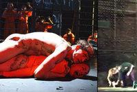 Skandál jako Brno! Divadlo uvede Ježíše, který znásilňuje muslimku, i felaci Jana Pavla II.