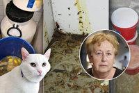 Mražené kočky a psi v bistrech? Hygienička popsala, co odhalily kontroly