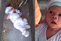 Louise (2 měsíce) nechala matka na hřbitově: Plakat ho uslyšeli lidé bydlící poblíž