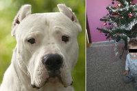 Pes zakousl Vlastíka (†1) v Přerově. Policie ze smrti dítěte obvinila muže, je to nejspíš příbuzný
