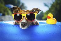 Pozor na přehřátí u psů! Jak ho poznat a co dělat