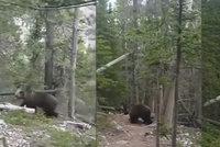 Turisté se na lesní cestě potkali s grizzlym! Setkání s obří šelmou si natočili na kameru