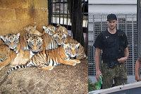 Tygří jatka: Vytrhané drápy, kosti, vývar a obviněný Berousek!
